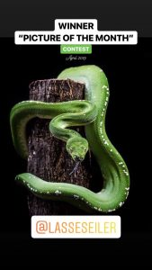 green tree python photos