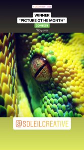 green tree python picture
