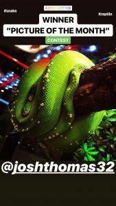 green tree python photos